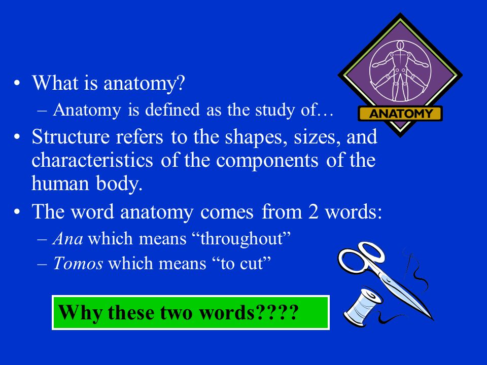 What Is Anatomy Anatomy Is Defined As The Study Of Structure