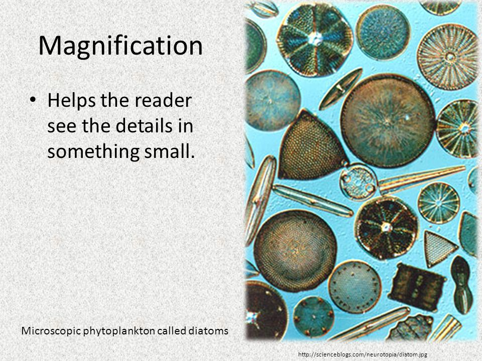 Magnification Helps the reader see the details in something small.
