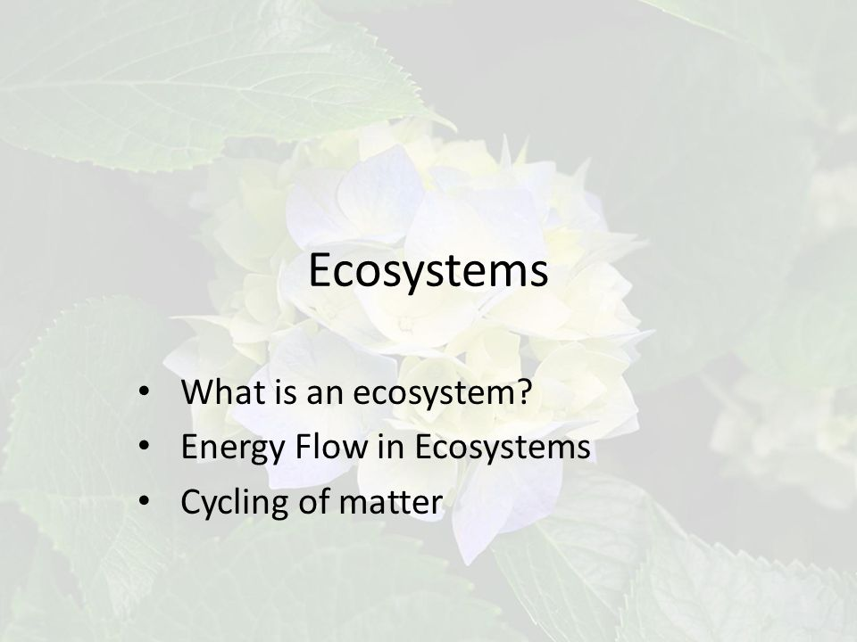 Ecosystems What is an ecosystem Energy Flow in Ecosystems Cycling of matter