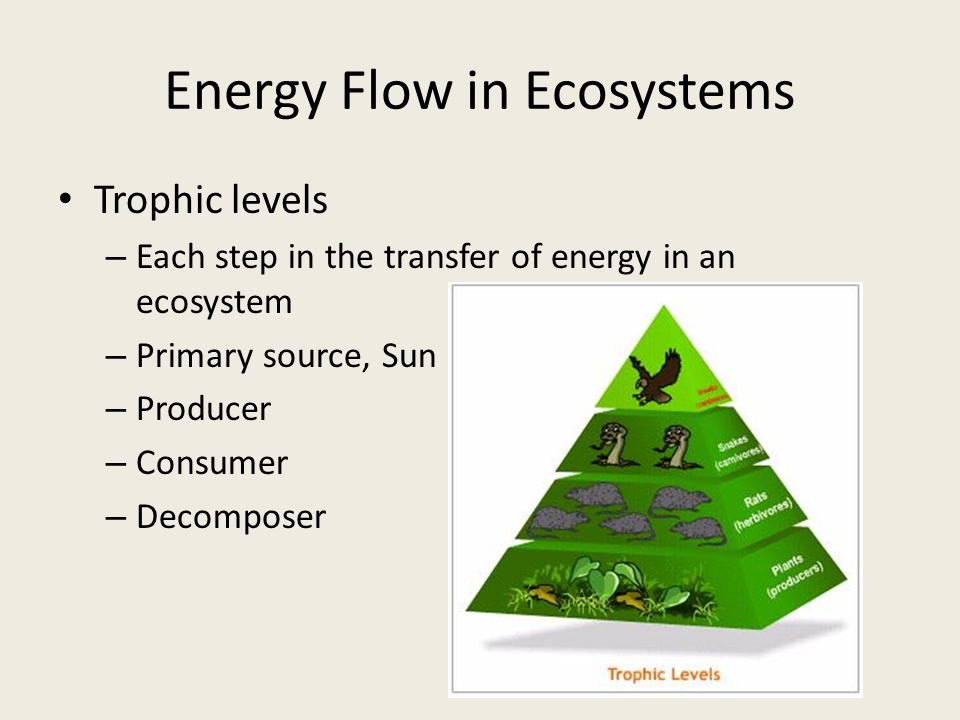 Energy Flow in Ecosystems Trophic levels – Each step in the transfer of energy in an ecosystem – Primary source, Sun – Producer – Consumer – Decomposer