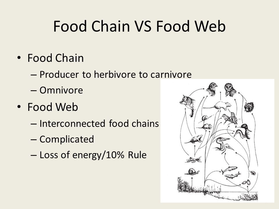 Food Chain VS Food Web Food Chain – Producer to herbivore to carnivore – Omnivore Food Web – Interconnected food chains – Complicated – Loss of energy/10% Rule