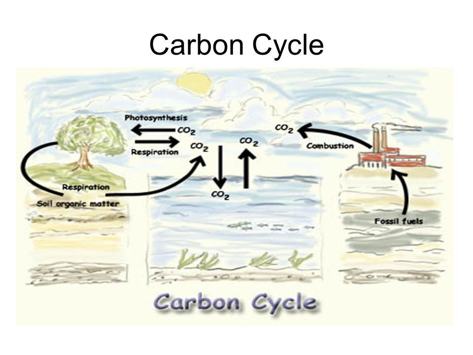 The greenhouse effect draw and label a diagram of the carbon cycle 3 carbon cycle ccuart Gallery