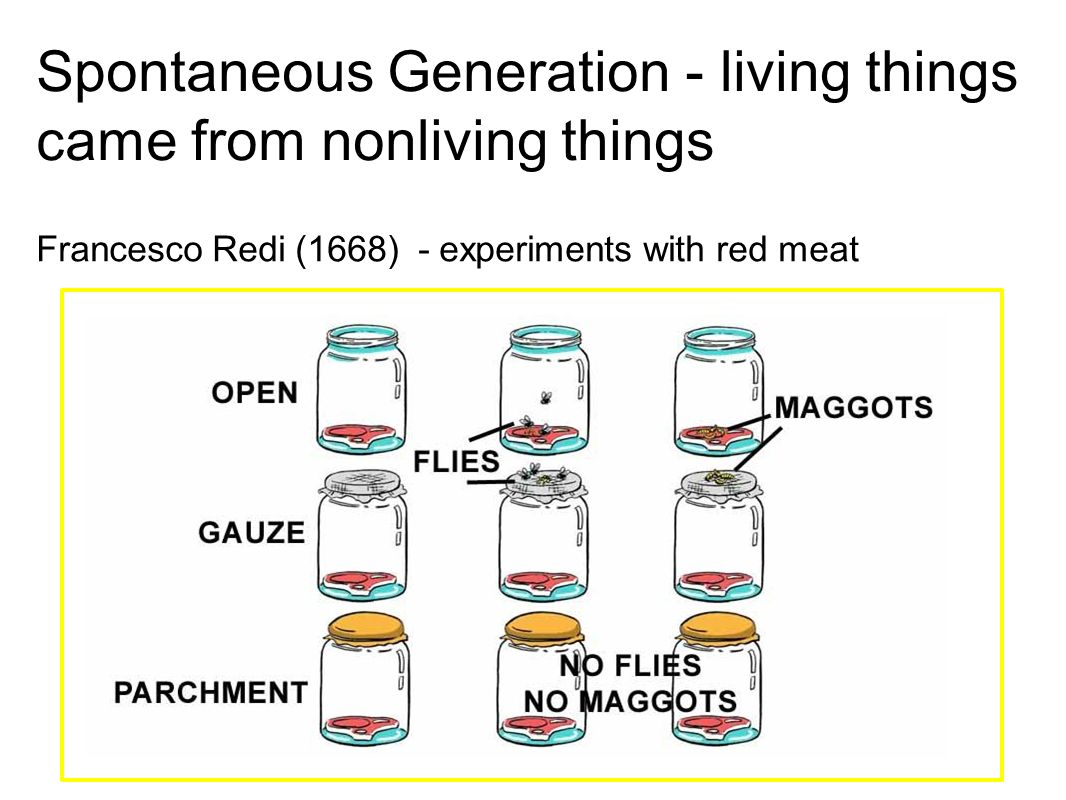 Spontaneous Generation - living things came from nonliving things Francesco Redi (1668) - experiments with red meat