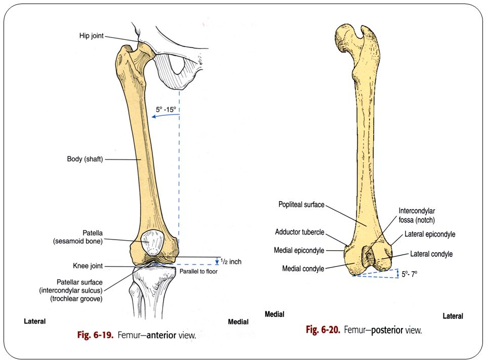 Radiographic Technique Of Femur Knee Joint Patella And Leg Ppt