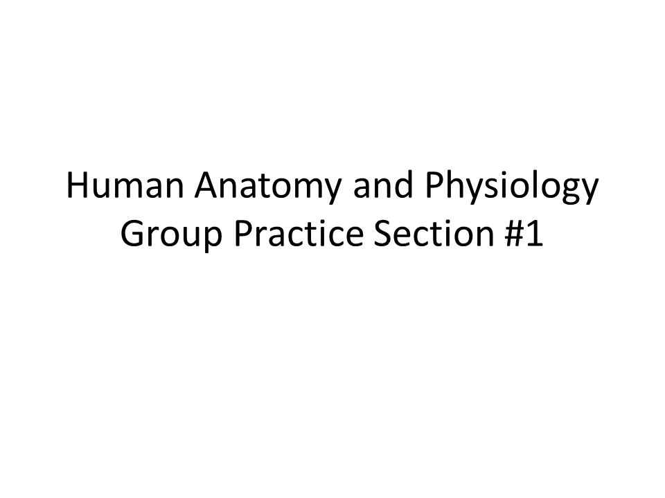 Human Anatomy and Physiology Group Practice Section #1. - ppt download