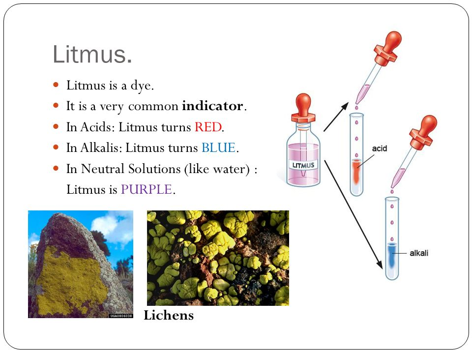 Litmus. Litmus is a dye. It is a very common indicator.