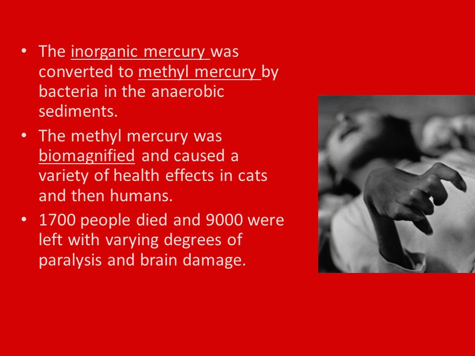 The inorganic mercury was converted to methyl mercury by bacteria in the anaerobic sediments.