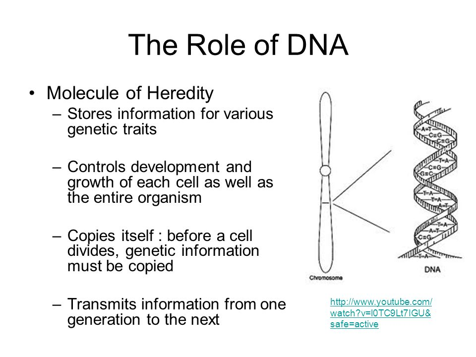 heredity structure and function Dna and heredity • dna stands for deoxyribonucleic acid - dna is a nucleic acid • one of the core four organic compounds - dna controls independent activity part 2 you must demonstrate understanding of dna's structure and function you may draw, write a song, act out the process in a.