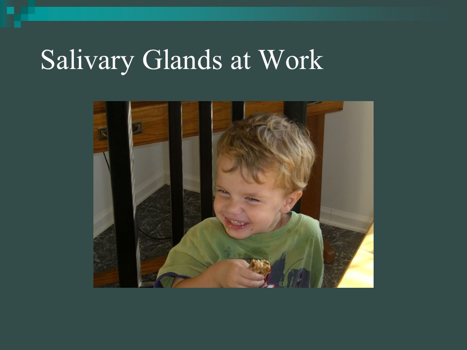 Salivary Glands Saliva contains an enzyme called salivary amylase.