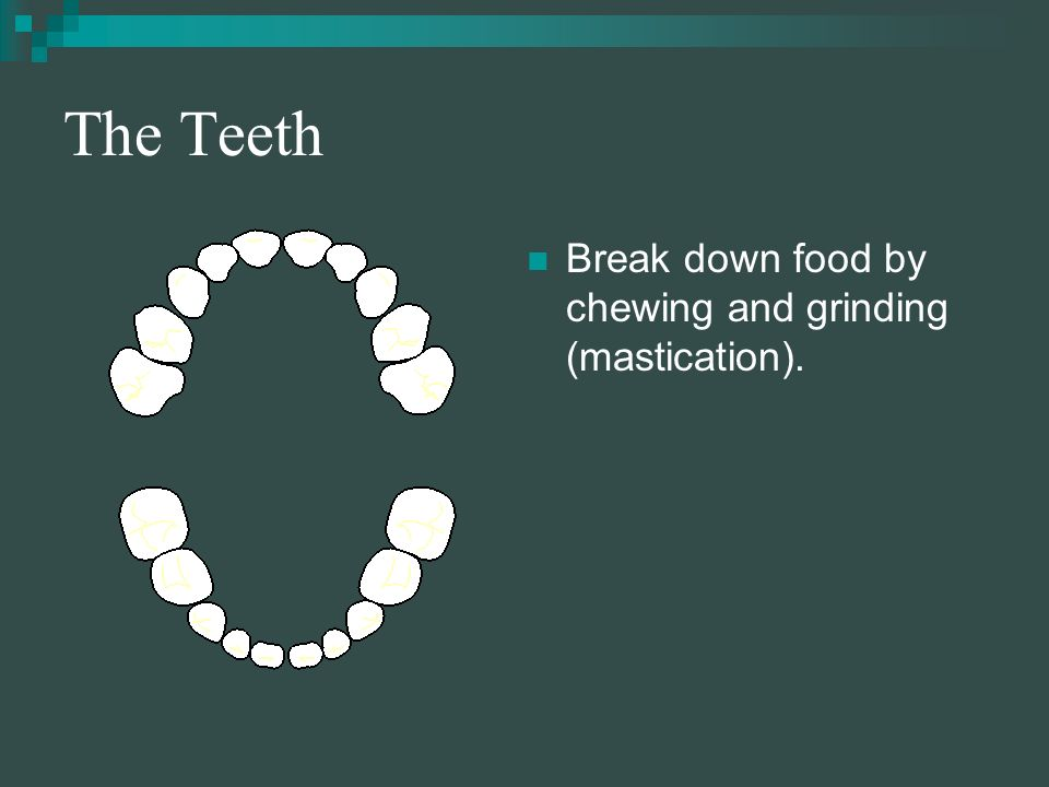 The Mouth Food is tasted, broken down by teeth, lubricated and partially digested by saliva.
