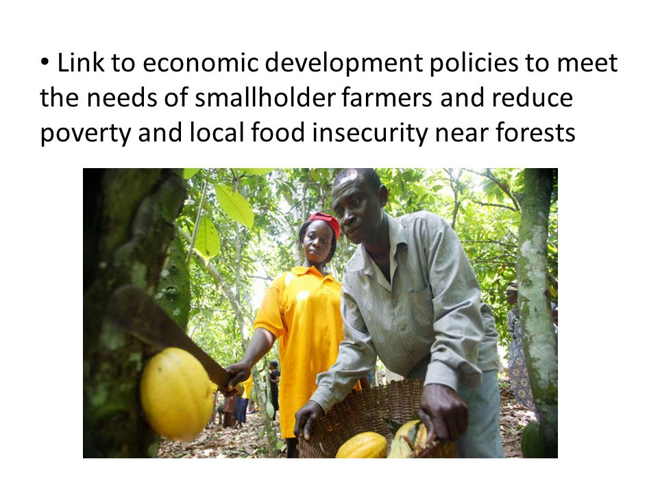 Link to economic development policies to meet the needs of smallholder farmers and reduce poverty and local food insecurity near forests