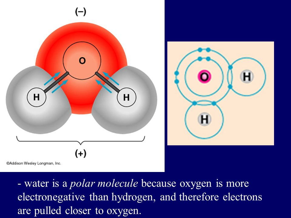 Polar Covalent Bonds: Unevenly matched, but willing to share.