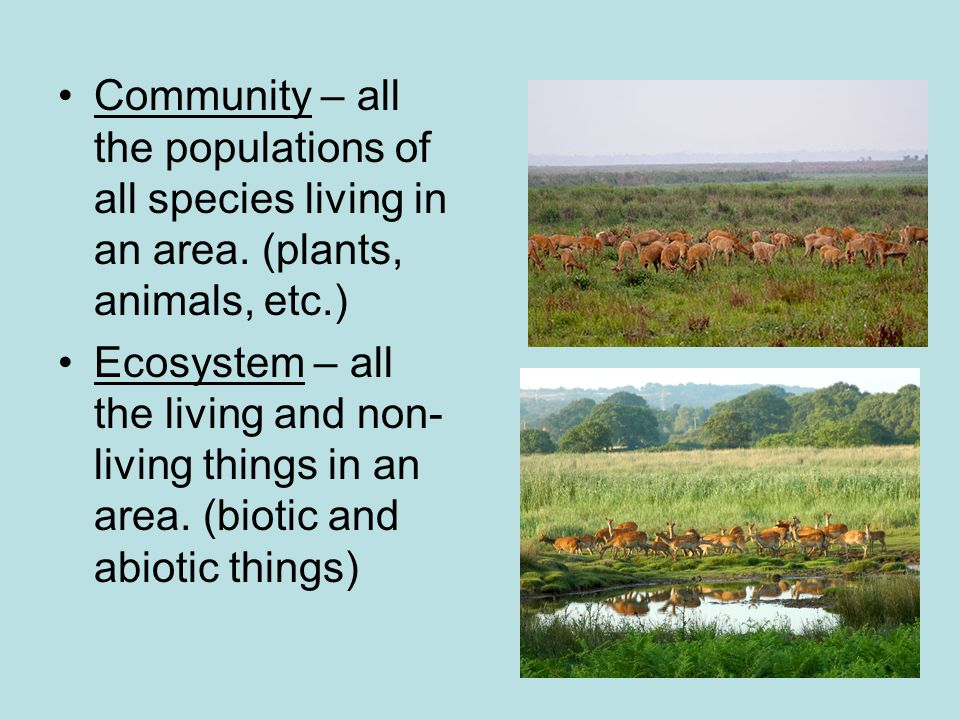 Community – all the populations of all species living in an area.