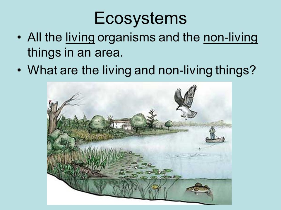 Ecosystems All the living organisms and the non-living things in an area.