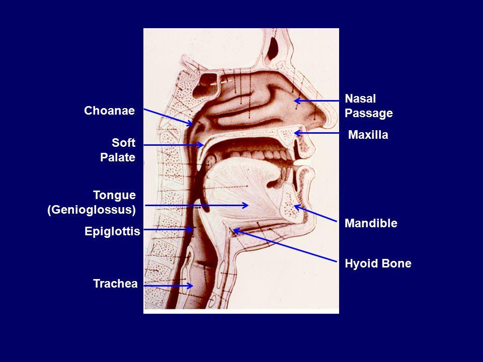 How can Obstructive Sleep Apnea be Evaluated Beyond Anatomy? David P ...