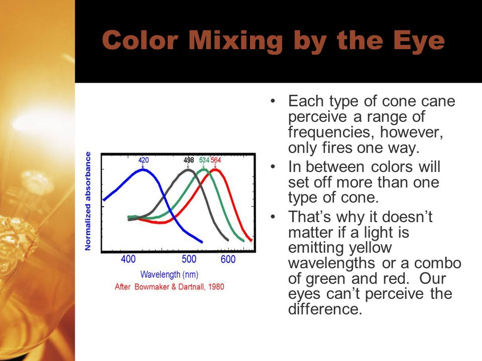 Color Mixing by the Eye Each type of cone cane perceive a range of frequencies, however, only fires one way.