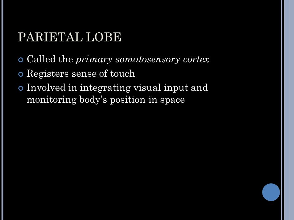 PARIETAL LOBE Called the primary somatosensory cortex Registers sense of touch Involved in integrating visual input and monitoring body's position in space