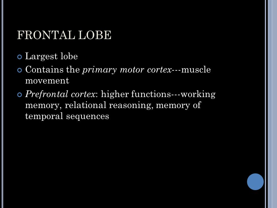 FRONTAL LOBE Largest lobe Contains the primary motor cortex ---muscle movement Prefrontal cortex : higher functions---working memory, relational reasoning, memory of temporal sequences