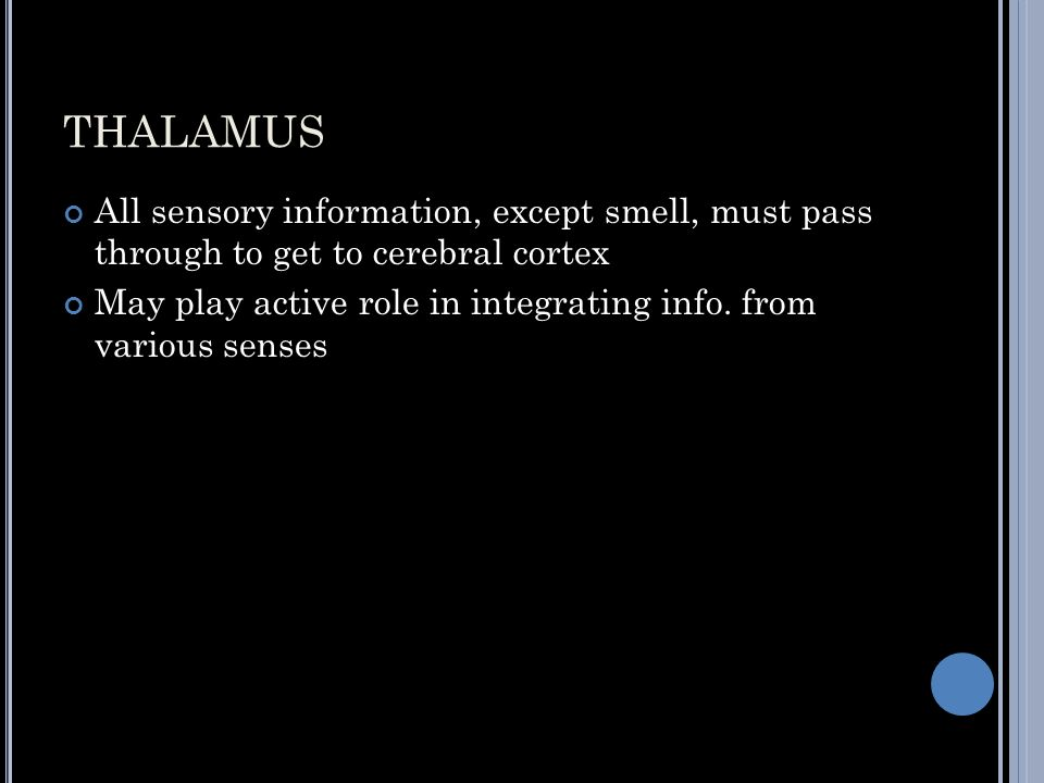 THALAMUS All sensory information, except smell, must pass through to get to cerebral cortex May play active role in integrating info.