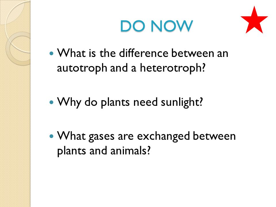 do now what is the difference between an autotroph and a heterotroph