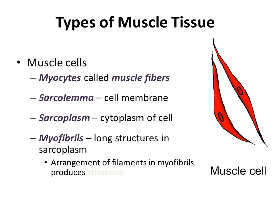 Brainstorm A List Of The Three Types Of Muscle And Their