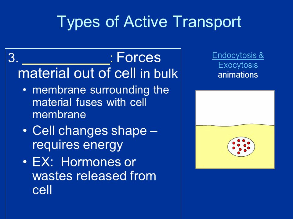 Types of Active Transport 3.