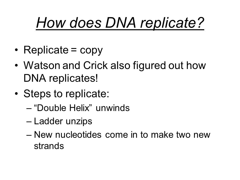 How does DNA replicate. Replicate = copy Watson and Crick also figured out how DNA replicates.