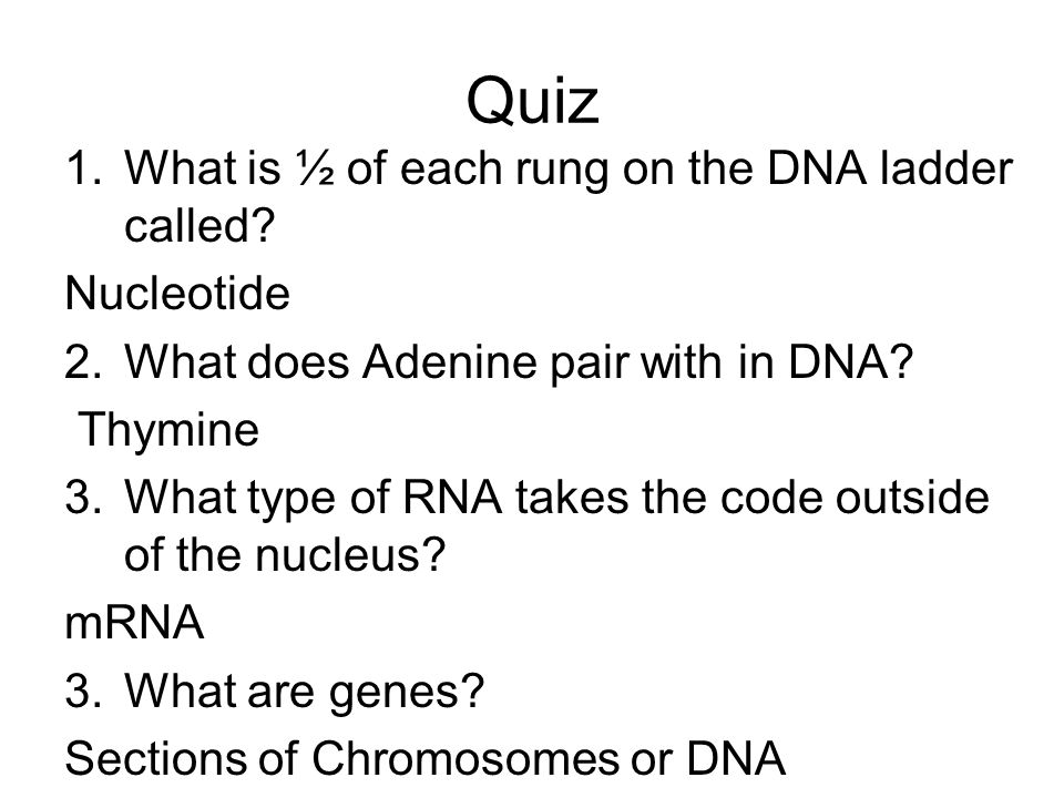 Quiz 1.What is ½ of each rung on the DNA ladder called.