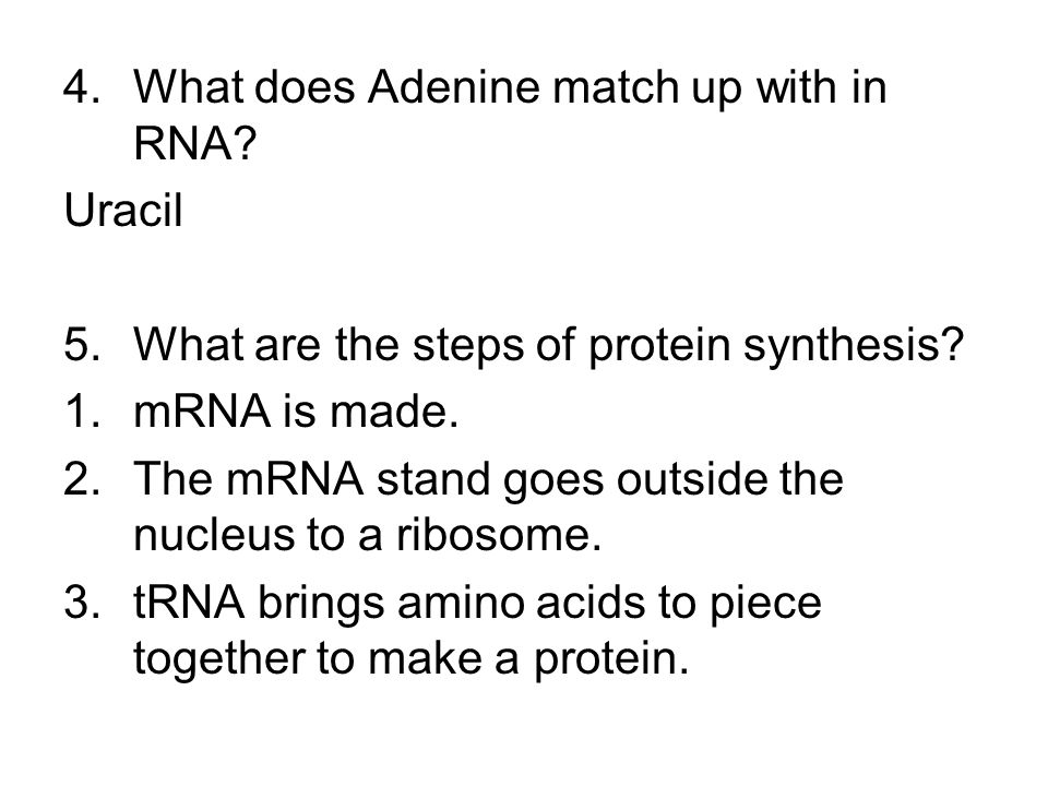 4.What does Adenine match up with in RNA. Uracil 5.What are the steps of protein synthesis.