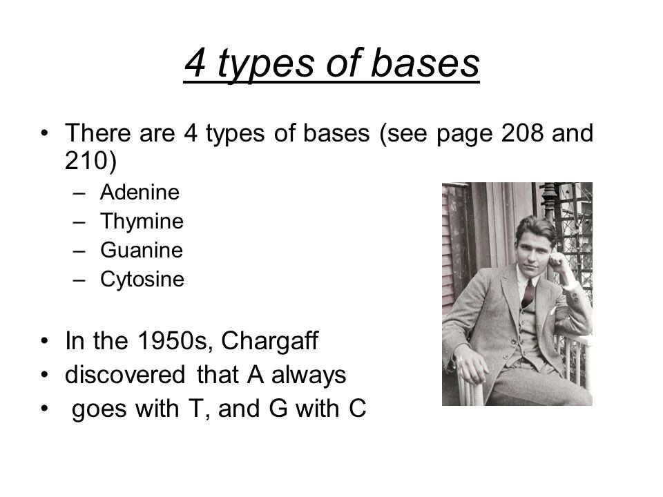 4 types of bases There are 4 types of bases (see page 208 and 210) – Adenine – Thymine – Guanine – Cytosine In the 1950s, Chargaff discovered that A always goes with T, and G with C