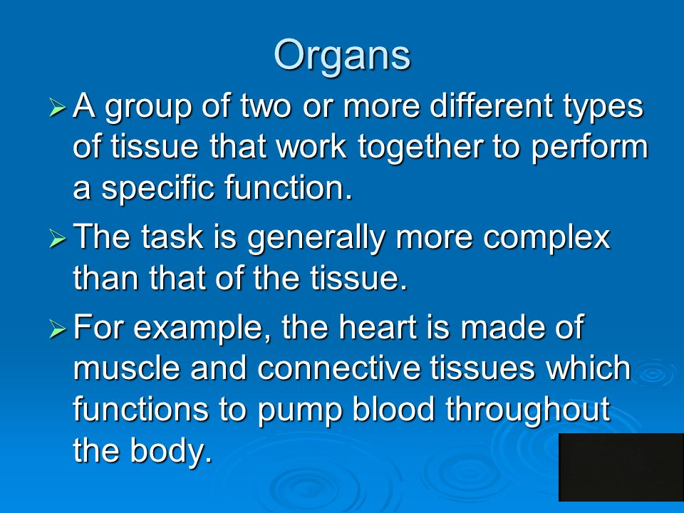 Organs  A group of two or more different types of tissue that work together to perform a specific function.