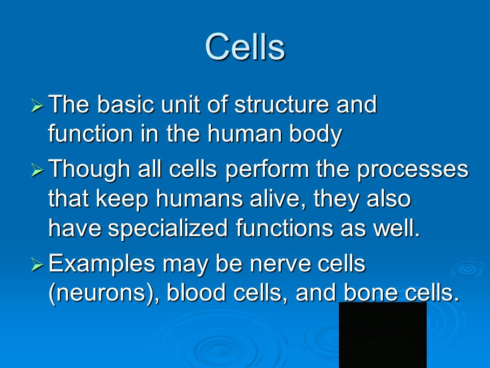 Cells  The basic unit of structure and function in the human body  Though all cells perform the processes that keep humans alive, they also have specialized functions as well.
