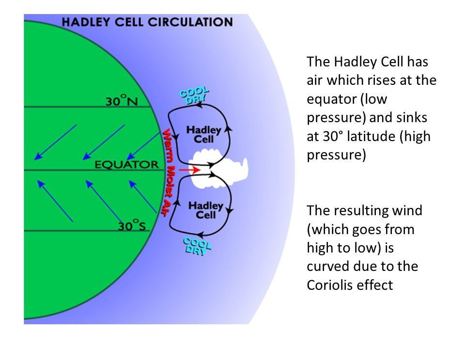 The Hadley Cell has air which rises at the equator (low pressure) and sinks at 30° latitude (high pressure) The resulting wind (which goes from high to low) is curved due to the Coriolis effect