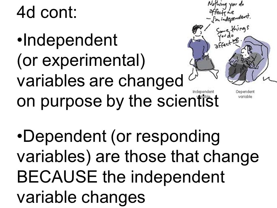 4d cont: Independent (or experimental) variables are changed on purpose by the scientist Dependent (or responding variables) are those that change BECAUSE the independent variable changes