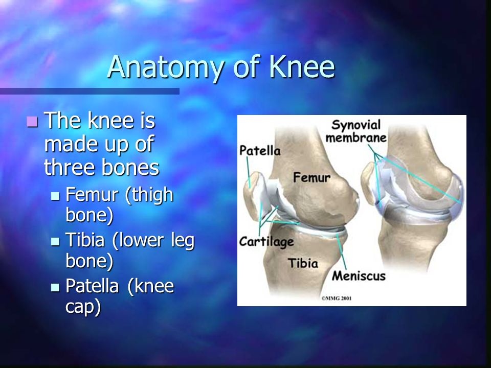 Computer Assisted Knee Replacement Surgery Anatomy Of Knee The Knee