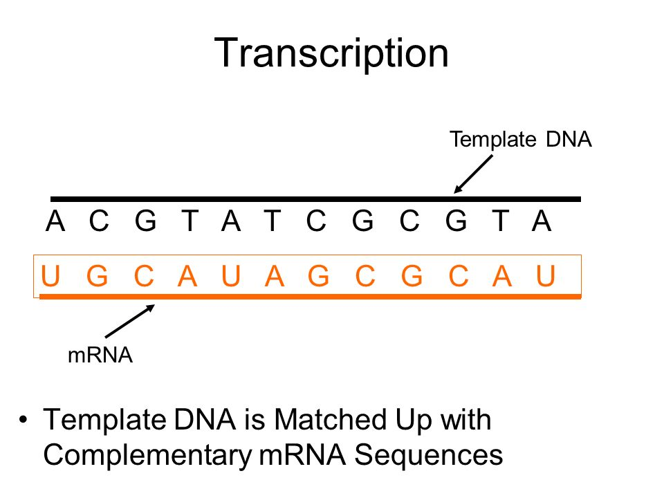 Transcription and Translation. What is Transcription? It is a ...