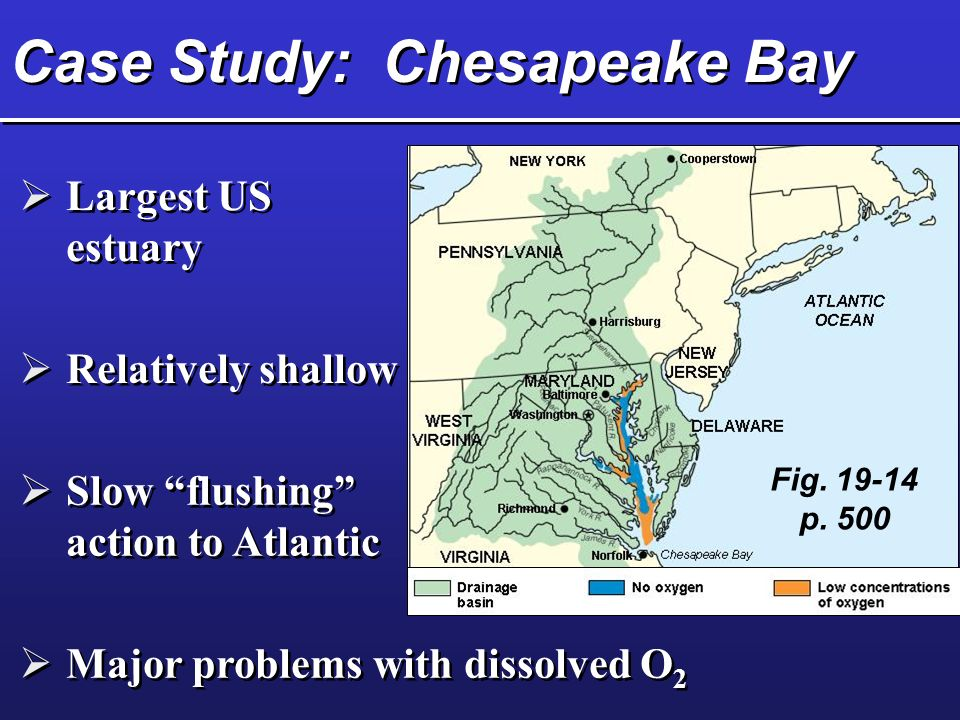 Case Study: Chesapeake Bay  Largest US estuary  Relatively shallow  Slow flushing action to Atlantic  Major problems with dissolved O 2 Fig.