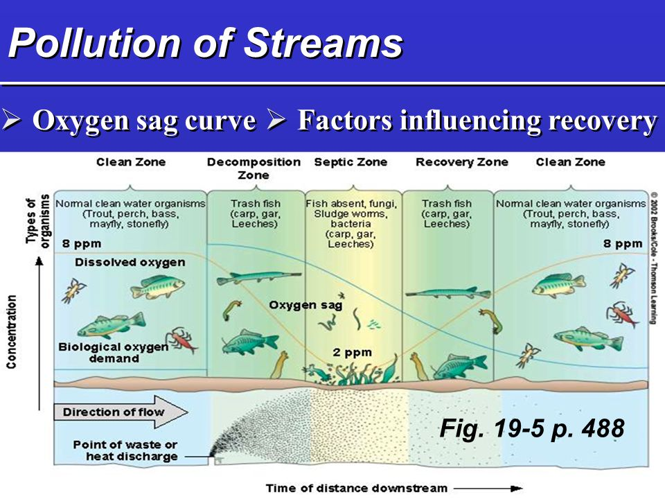 Pollution of Streams  Oxygen sag curve  Factors influencing recovery Fig p. 488