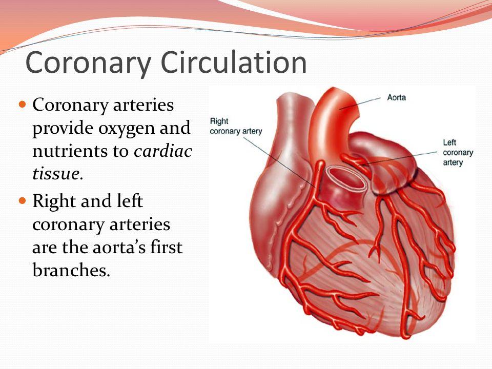 Coronary Circulation and Vasculature. Coronary Circulation Coronary ...