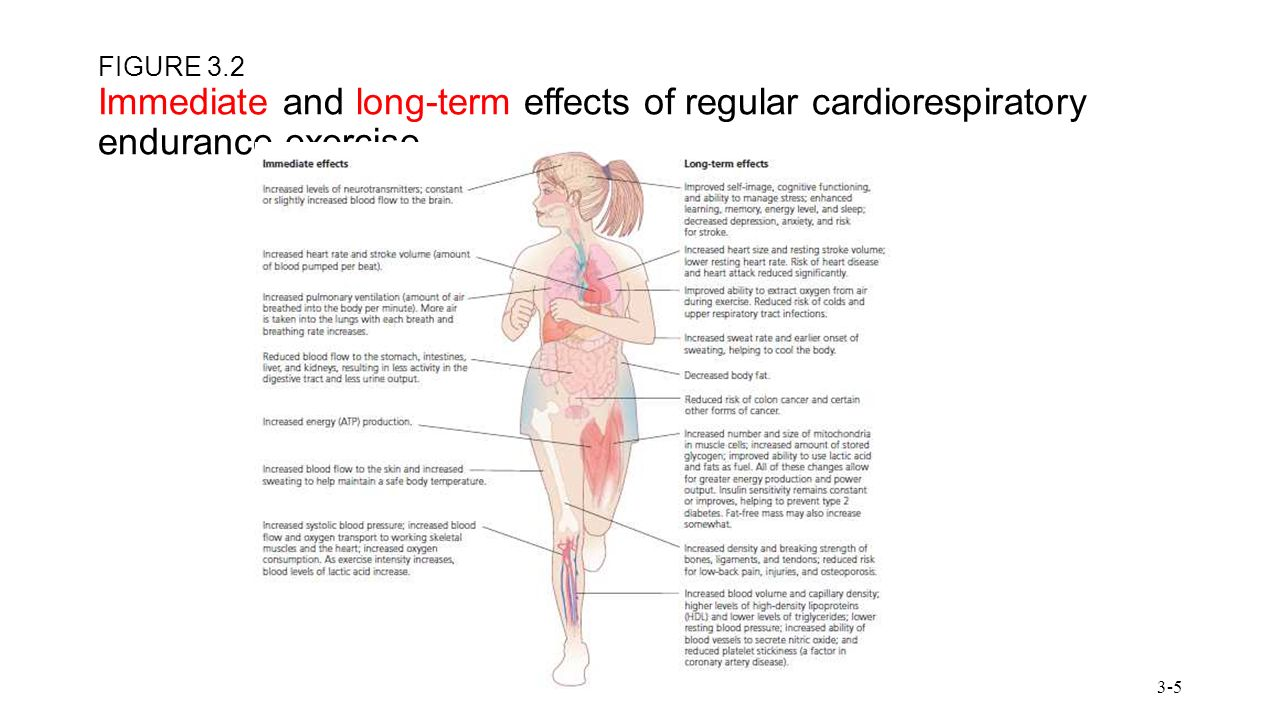 cardiovascular changes during exercise