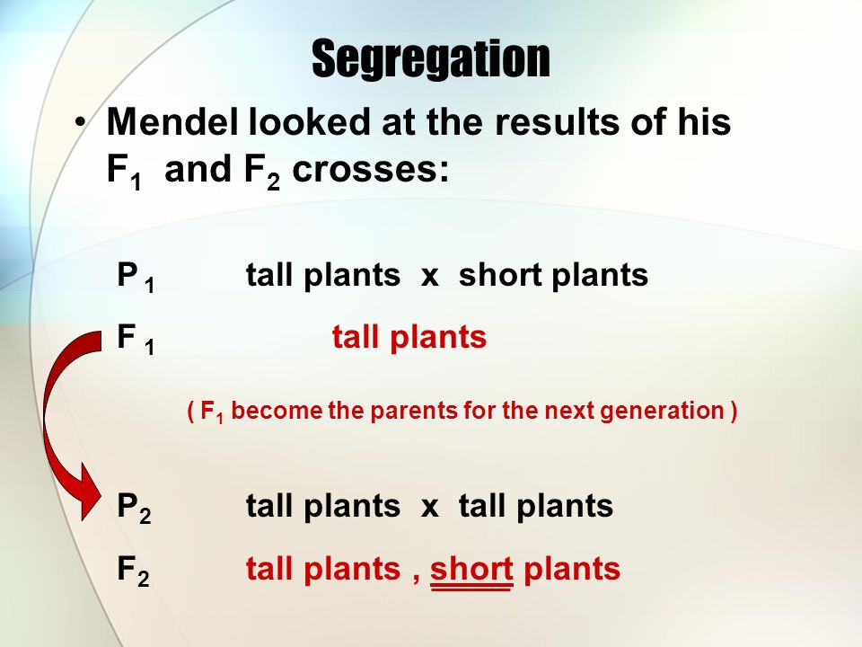 Segregation Mendel looked at the results of his F 1 and F 2 crosses: P 1 tall plants x short plants F 1 tall plants ( F 1 become the parents for the next generation ) P 2 tall plants x tall plants F 2 tall plants, short plants