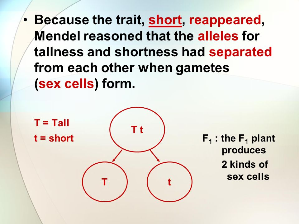Because the trait, short, reappeared, Mendel reasoned that the alleles for tallness and shortness had separated from each other when gametes (sex cells) form.