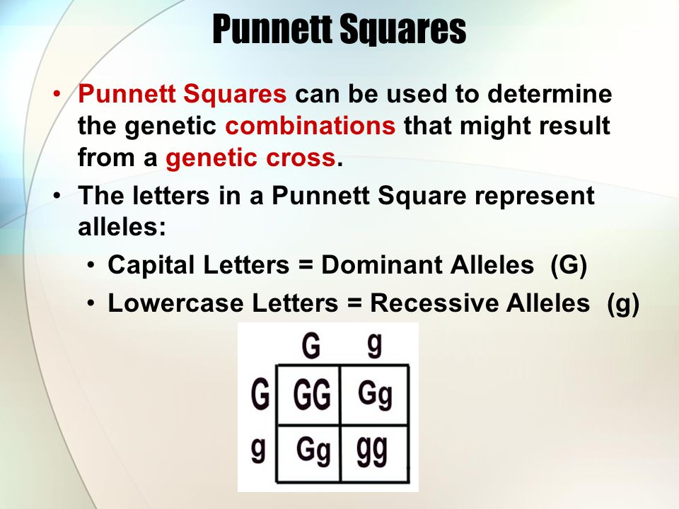 Punnett Squares Punnett Squares can be used to determine the genetic combinations that might result from a genetic cross.