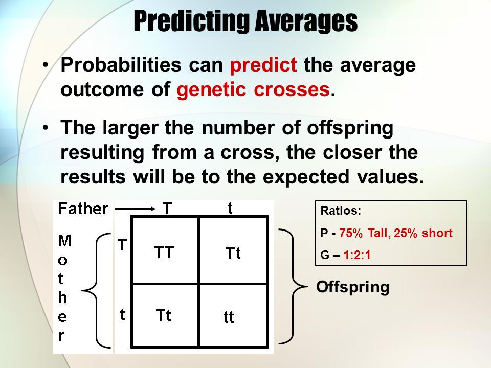 Predicting Averages Probabilities can predict the average outcome of genetic crosses.