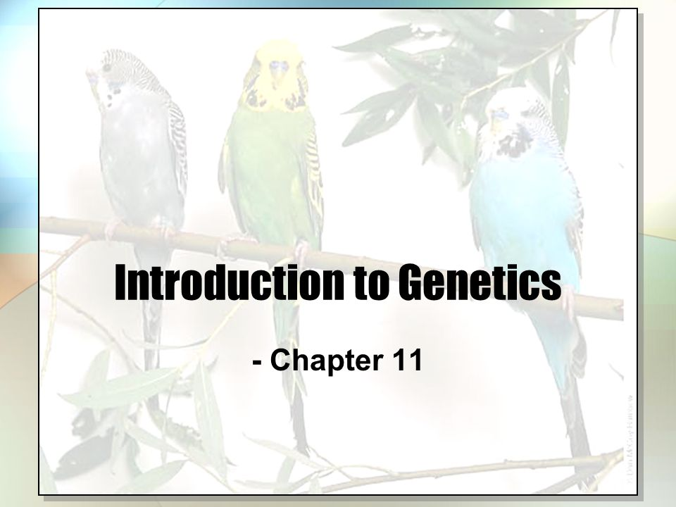 Introduction to Genetics - Chapter 11