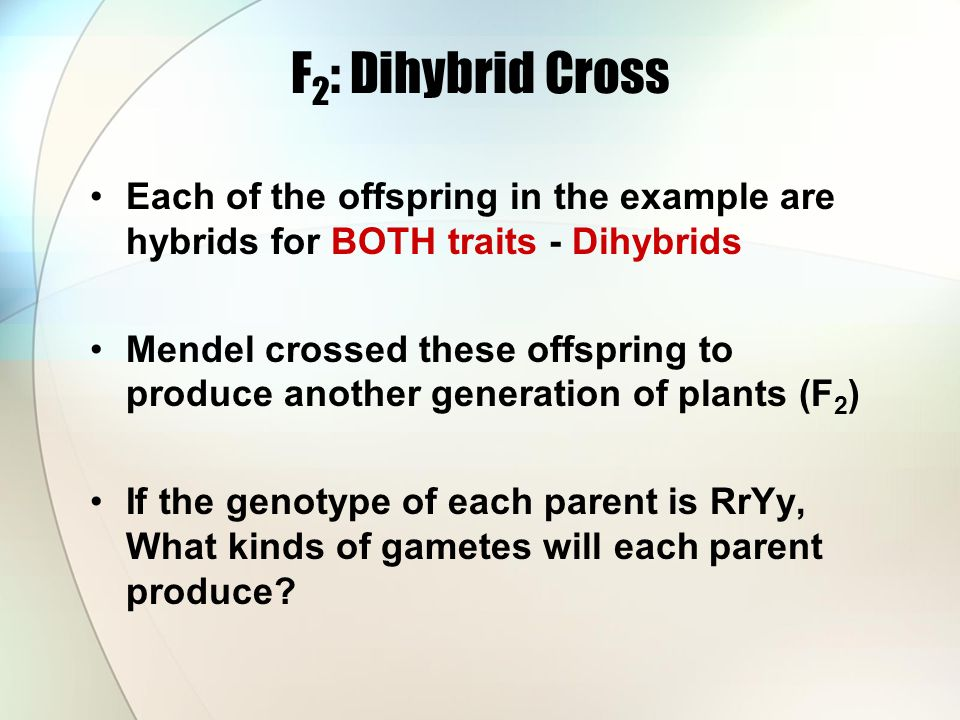 F 2 : Dihybrid Cross Each of the offspring in the example are hybrids for BOTH traits - Dihybrids Mendel crossed these offspring to produce another generation of plants (F 2 ) If the genotype of each parent is RrYy, What kinds of gametes will each parent produce