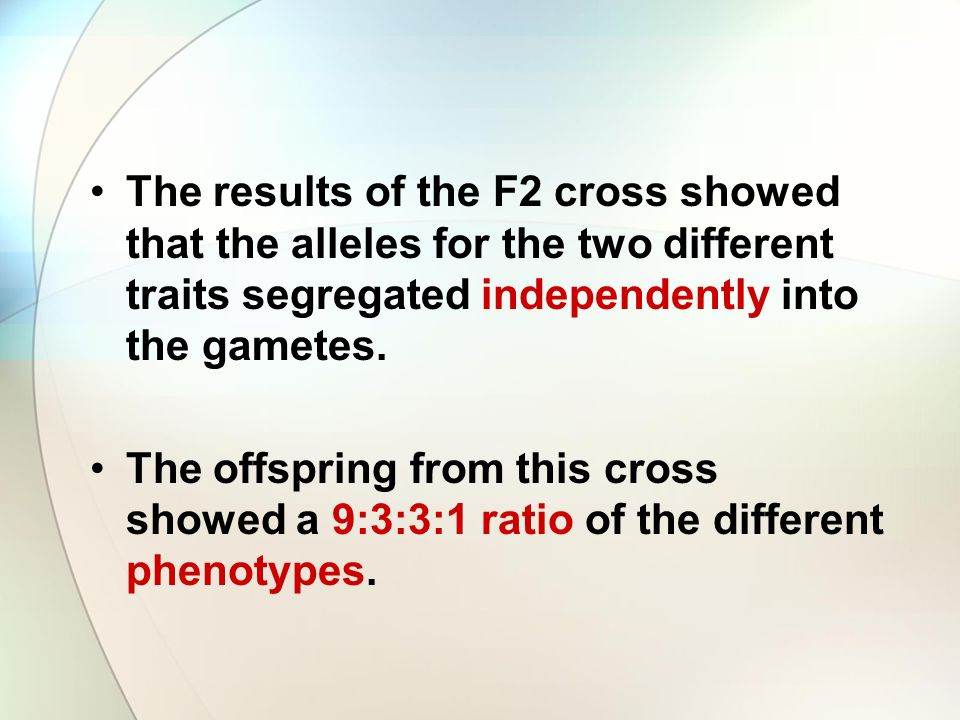 The results of the F2 cross showed that the alleles for the two different traits segregated independently into the gametes.