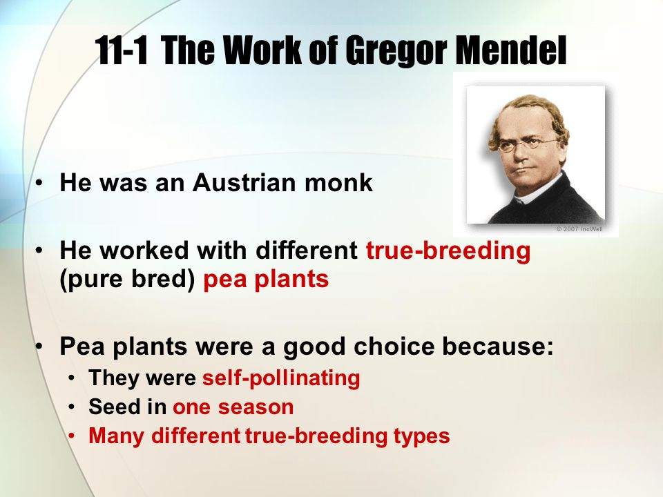 11-1 The Work of Gregor Mendel He was an Austrian monk He worked with different true-breeding (pure bred) pea plants Pea plants were a good choice because: They were self-pollinating Seed in one season Many different true-breeding types