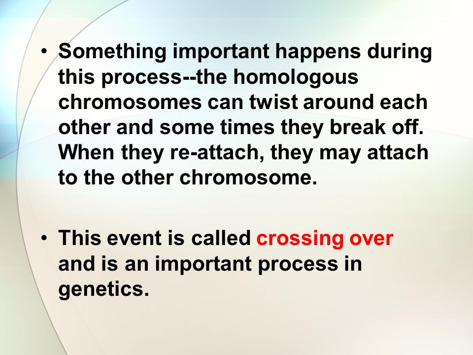 Something important happens during this process--the homologous chromosomes can twist around each other and some times they break off.
