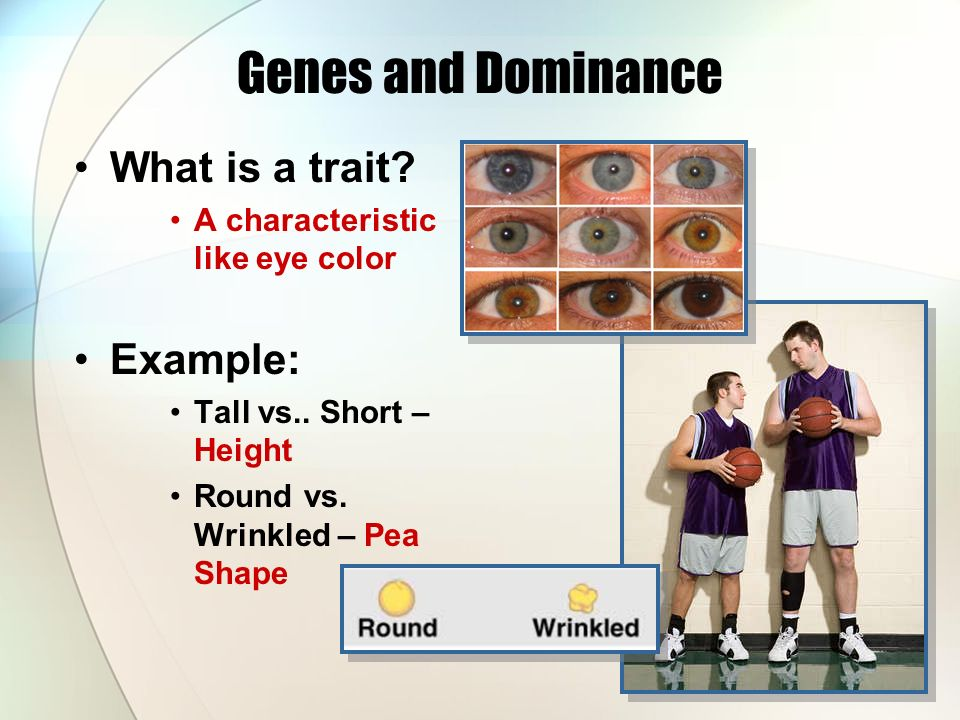 Genes and Dominance What is a trait. A characteristic like eye color Example: Tall vs..